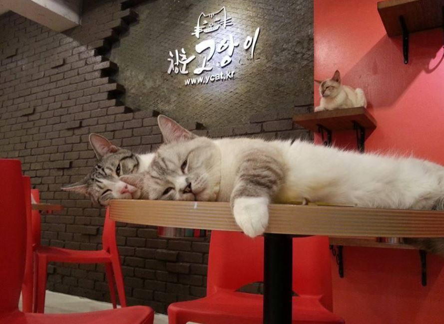 catcafe3