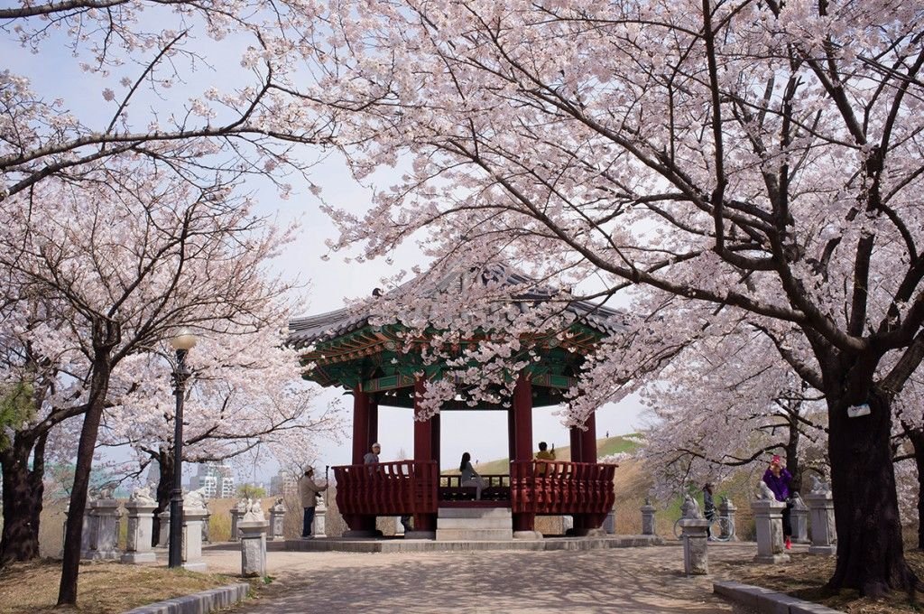 8 Spring Destinations To Visit In Seoul For Cherry Blossoms Hallyusg